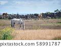 動物,馬,濟州島,油菜花 58991787