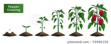 Pepper Growth Realistic Set 58996109