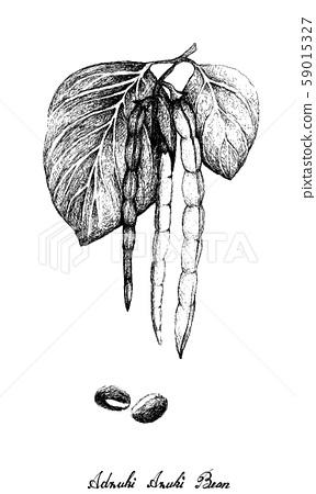 Hand Drawn of Adzuki Bean Plants on White 59015327