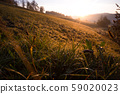 morning in the mountains 59020023