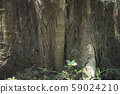 Tree close up texture detail natural wooden 59024210