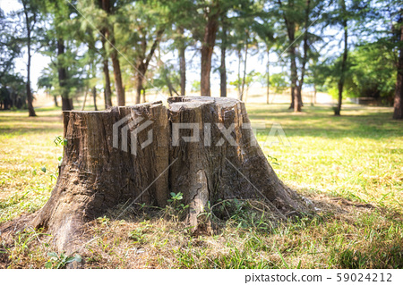 Tree close up texture detail natural wooden 59024212