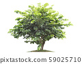 isolated big tree on White Background. 59025710