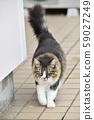 外猫(10岁) 59027249