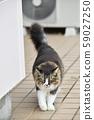外猫(10岁) 59027250