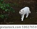 外猫 59027659