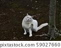 外猫 59027660