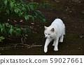外猫 59027661