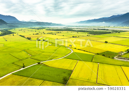 Aerial view of Beautiful Rice Fields in taitung . 59028331