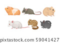 Small Gnawing Animals Vector Set Isolated On White Background 59041427