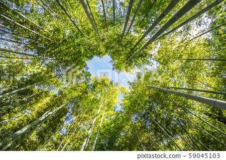 Bamboo grove in Shiratori Garden, Nagoya, Aichi Prefecture 59045103