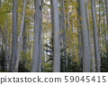 Thick forest 59045415