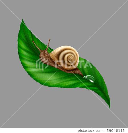 Illustration Snail on a Leaf 59046113