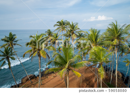 Aerial view of coconut trees at seaside the 59058080