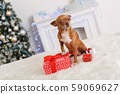 New Year. Decorated room with dog stepping on gift boxes happy close-up 59069627