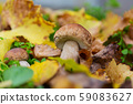 Mushroom in forest 59083627