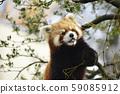 小熊貓 59085912