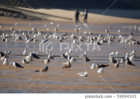 바다가 모래 사장에 앉아 있는 갈매기 59094503