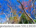 秋葉圖像 59113630
