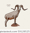 The argali, or the mountain sheep (species Ovis 59126525