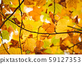 Background group autumn orange leaves. Outdoor. 59127353
