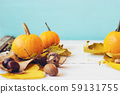 Mini pumpkins with yellow fallen leafs, against 59131755