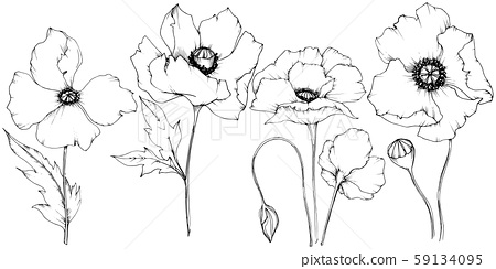 Wildflower poppy in a vector style isolated. 59134095