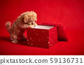 little puppy playing with a box of Christmas presents on a red background 59136731