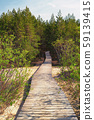 Wooden path leads through the dunes to the forest 59139415