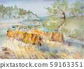 Rice harvesting scene 59163351