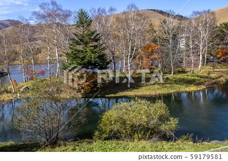 신슈 나가노 현 지노시 기타 야마 蓼 科 만추의 자작 나무 호수 59179581