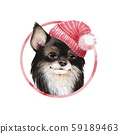 Chihuahua in red hat 59189463