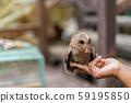 Close up hand to feeding Owl. 59195850