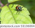 日本甲蟲 59196664