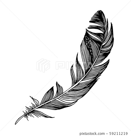 Vector bird feather from wing isolated. Black and white engraved ink art. Isolated feathers 59211219