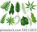 Tropical leaves. Exotic tropic leaf, botanic rainforest and tropics travel leafs painting cartoon 59211815