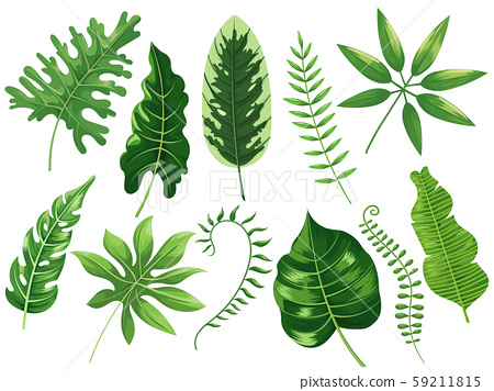 Tropical leaves. Exotic tropic leaf, botanic rainforest and tropics travel leafs painting cartoon 59211815