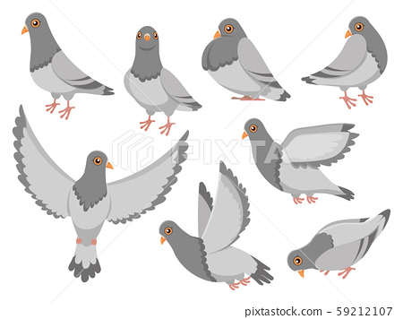 Cartoon pigeon. City dove bird, flying pigeons and town birds doves isolated vector illustration set 59212107