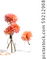 Dahlia flowers in a glass vase isolated 59212968