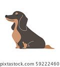 狗姿势面部表情1微型腊肠狗坐 59222460