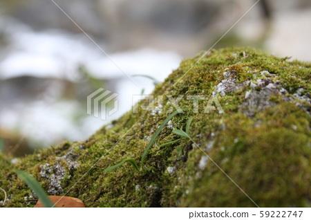 Moss 59222747
