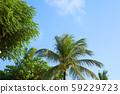 藍天和棕櫚樹 59229723