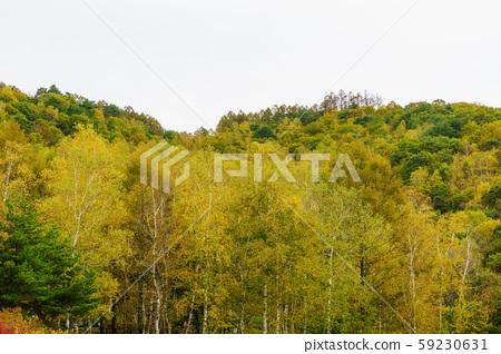 Autumn colored trees 59230631
