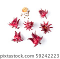 roselle hibiscus on white background. top view 59242223