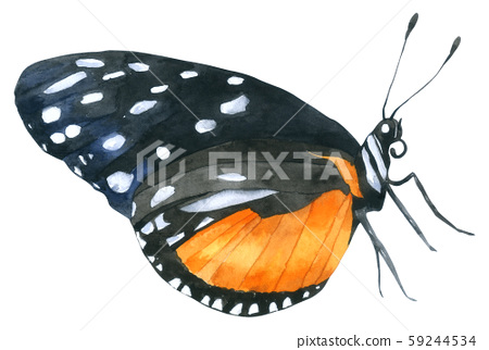 Butterfly watercolor collection isolated on white background Hand drawn painted 59244534