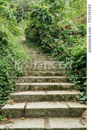 階梯與自然步道 59246288