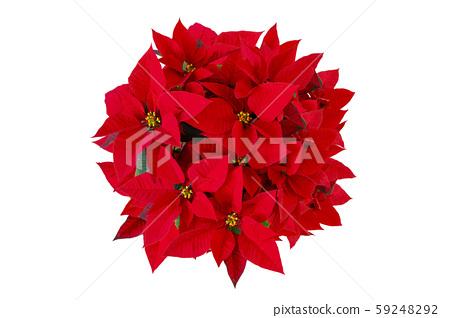 出生,化匡,戀人節,聖誕節紅色,公仔,情人節,情人節, 59248292