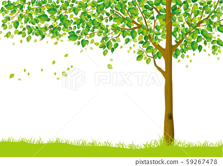 樹:樹幹樹枝性質綠葉新鮮的綠色新芽初夏夏季春季生態綠 59267478