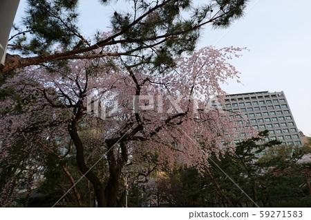 봄 덕수궁 59271583