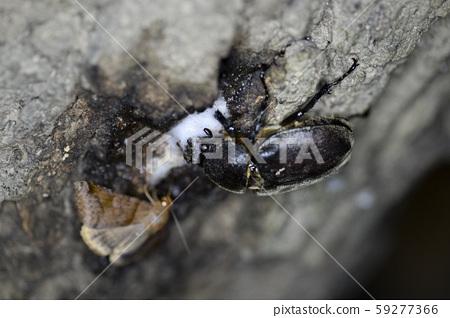 한국의 곤충 59277366